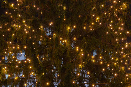 Christmas tree lights on the Christmas tree. The concept of congratulations and meeting the new year. High quality photo