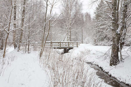 Winter forest covered with snow and a small river in Finland in Espoo. Scandinavian nature. High quality photo