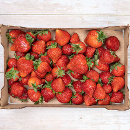 ripe, red strawberries in a box, top view. Summer concept, harvesting