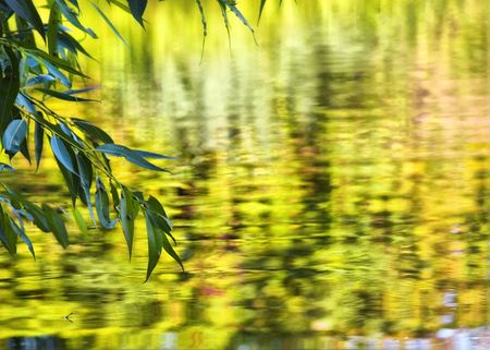 green leaf over water yellow zeokalnaya surface to promote water lake pond river landscape nature air positive happiness lives Stock Photo - 5414867