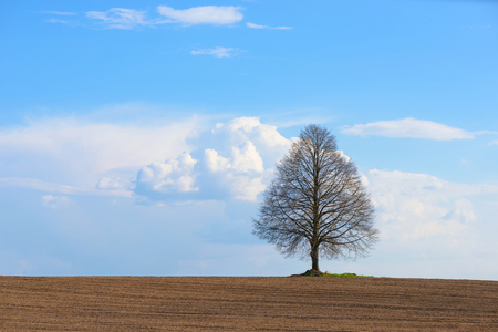 A lonely tree stands in the middle of a plowed field on a cloudy sky background