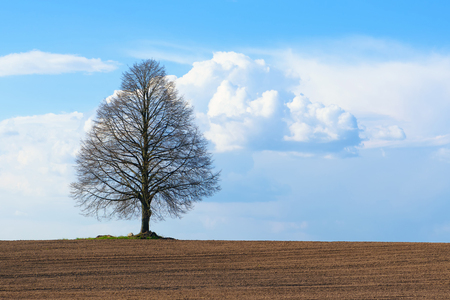 A lonely tree stands in the middle of a plowed field on a sky background