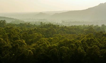 Dense woods Reklamní fotografie
