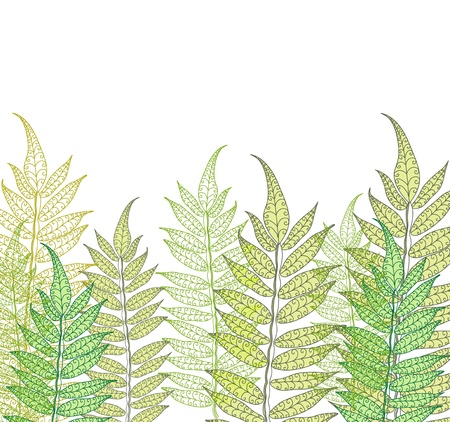 Card with fern, beautiful illustration Vector
