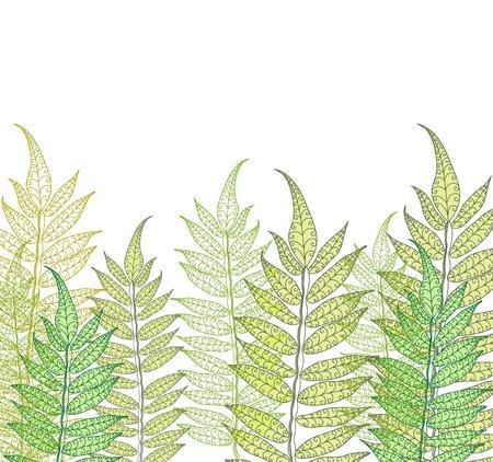 fern: Card with fern, beautiful illustration Illustration