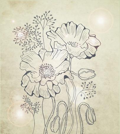 amapola: Resumen floral fondo de amapola, ilustración