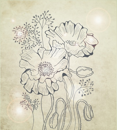 amapola: Resumen floral fondo de amapola, ilustraci�n