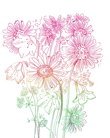 camomile flower: wild flowers background, beautiful floral illustration