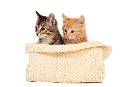 cute kittens: Two cute kittens in the fabric basket