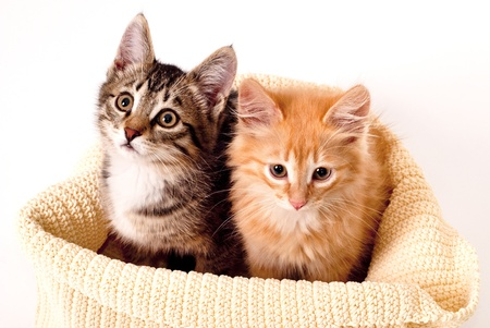 Two cute kittens in the fabric basket photo