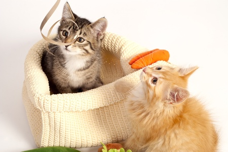 Two cute playful kittens in the fabric basket photo