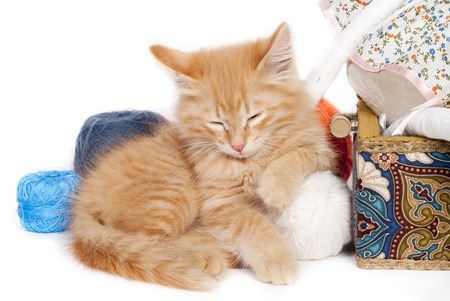 red sleepy kitten with color threads photo