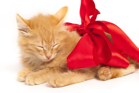 red sleepy kitten with red ribbon photo