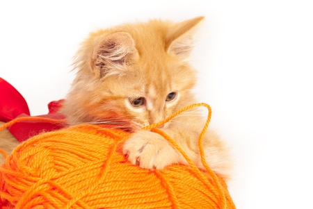 red kitten with orange thread photo