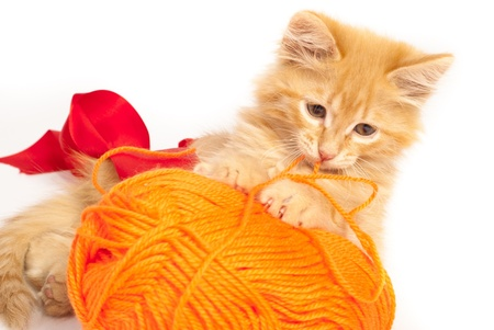 red kitten with orange thread Stock Photo - 13450410