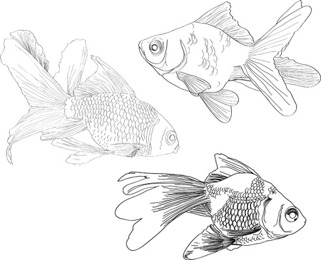 dibujos lineales: Mano de dibujo pescaditos de oro sobre fondo blanco