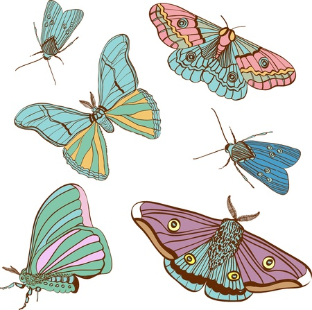 moths: set of two cute color moth for design, butterfly Illustration