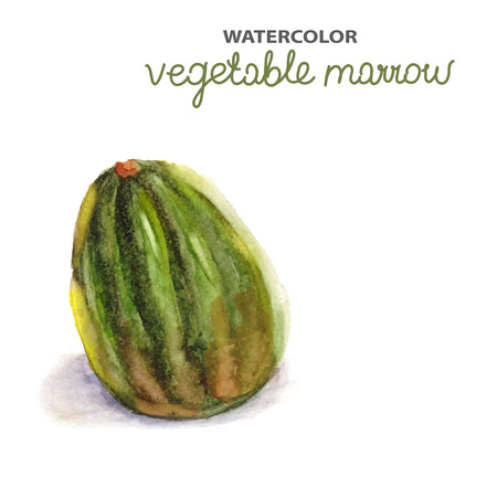 marrow squash: Background with watercolor marrow, natural illustration