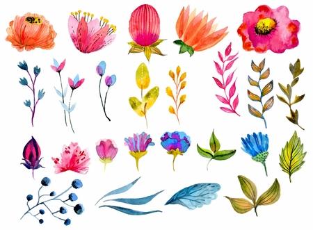 dibujos de flores: Flor hermosa de la acuarela de conjunto sobre fondo blanco para el diseño