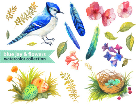 Blue jay and flowers collection for beautiful design Illustration