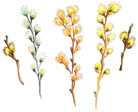 pussy tree: Watercolor willow branch collection for deautiful holiday design