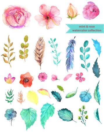 pluma: Acuarela floral colección, menta y rosa para el diseño hermoso Vectores