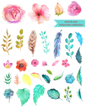 a feather: Watercolor floral collection, mint and rose for beautiful design
