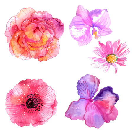 Beautiful Watercolor flower set over white background for design Stok Fotoğraf - 40190919