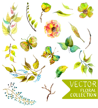 nature: Watercolor flowers collection for different design with natural floral elements and butterfly
