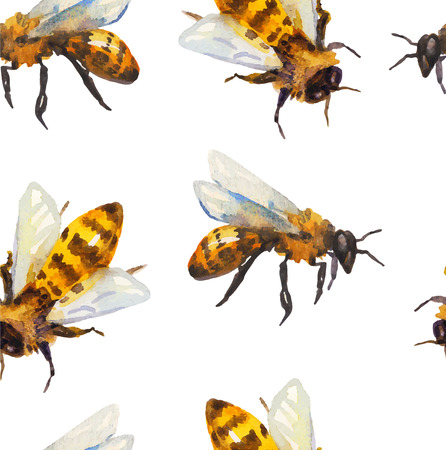 bees: Watercolor seamless pattern with bee over white
