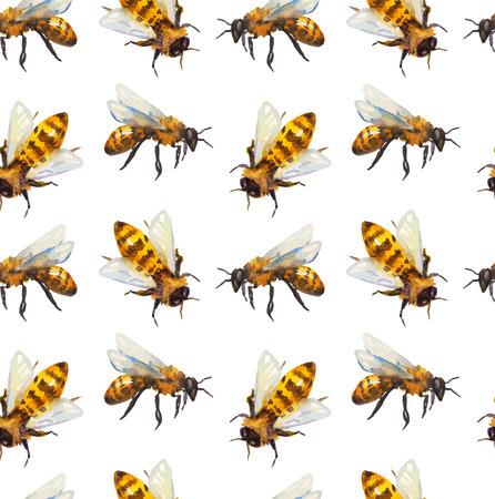 abeja: Acuarela Modelo inconsútil con la abeja sobre blanco