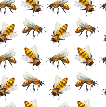 a bee: Watercolor seamless pattern with bee over white