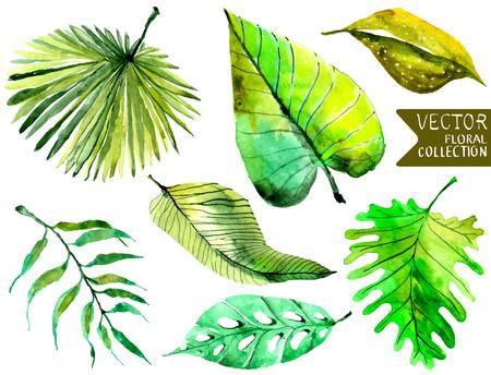 熱帯での水彩の花の背景の美しいデザインの葉の美しいコレクション