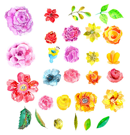 Beautiful Watercolor flower set over white background for design