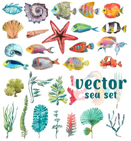 수채화 바다 생활, 해초, 쉘, 물고기, 해마, 디자인을위한 아름다운 컬렉션