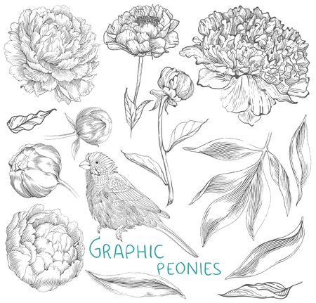Ink hand drawn illustrations of ornate peonies. Flower buds, leaves and stems and bird, beautiful card design Illustration