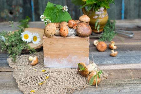 コケ ・野草以上の素朴な木製の背景花とポルチーニ茸と新鮮な森林菌 写真素材