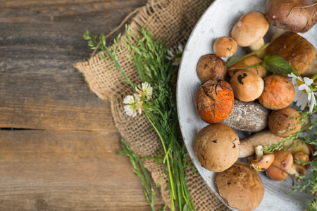 Fresh woodland fungi with boletus mushrooms with moss and wild grass and flowers over rustic wooden background