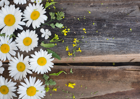 chamomile flowers, beautiful flowers over wood background Stok Fotoğraf