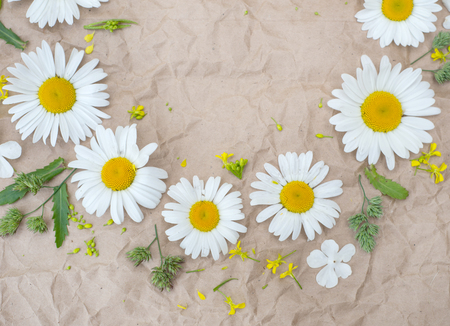chamomile flowers, beautifu fieldl flowers over brown paper background Stock Photo