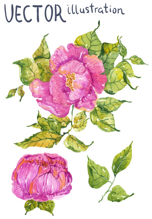 Watercolor color flowers: peony or rose, bright and beautiful isolated over white
