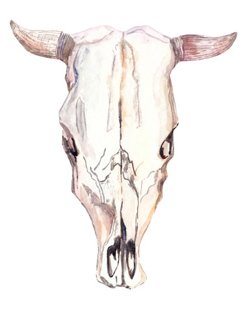 Watercolor bull skull over white, beautiful boho style art Stockfoto