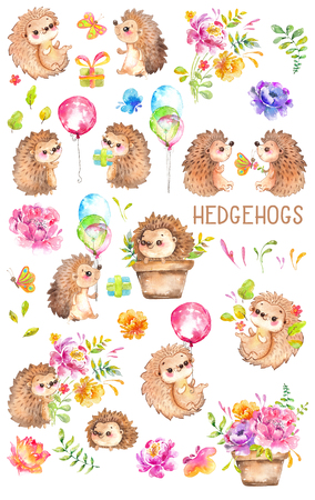 Watercolor Hedgehogs. Babies. Watercolor little animal clipart, flowers, child, kid, baby-born, babyshower, decoration