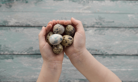 Easter background, small children hands hold quail eggs over wooden background