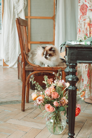 Flower bouquet and cat over vintage interior, floral still life, bright spring flowers 写真素材
