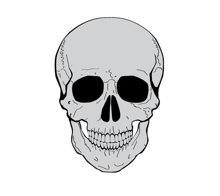 Illustration of a human skull. Vector illustration. Vector