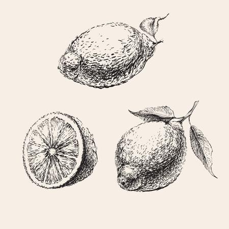 zest: Hand Drawn Sketch of  Lemons Set Illustration