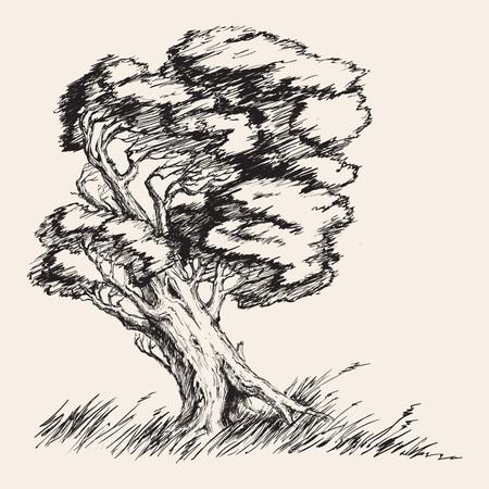 roble arbol: ejemplo del vector dibujado mano fuerte viento árbol