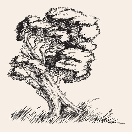oak wood: Strong wind tree hand drawn vector illustration Illustration