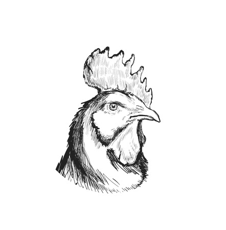 Rooster, Cock Cockerel Hand Drawn Vector llustration Sketch. Symbol of New Year 2017.
